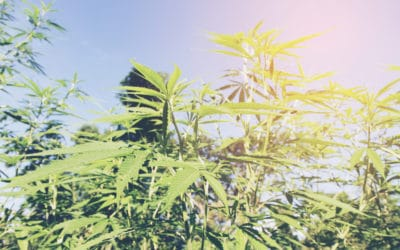 Federal regulations strict on cannabis packaging; get the most out of your labels with Lorpon